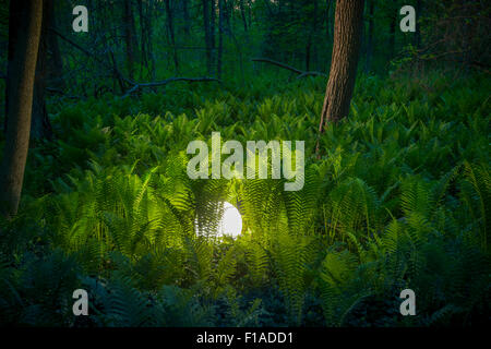 Glowing Orb In Fern Forest - Stock Photo