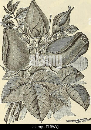 Dreer's wholesale price list : seeds for florists plants vegetable seeds, tools, fertilizers, sundries, etc - Stock Photo