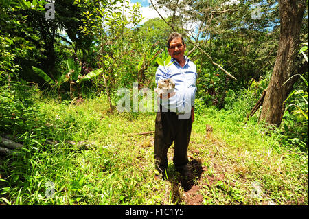 Guatemala, Concepcion las Minas, man planting a new tree for the forestration program (Francisco Salguero 75 years) - Stock Photo