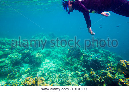 Man snorkeling off the coast of Coron Island at Coral Eden, Palawan, Philippines - Stock Photo