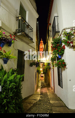Calleja de las Flores with Cathedral Tower in background, Cordoba, Andalusia, Spain Stock Photo