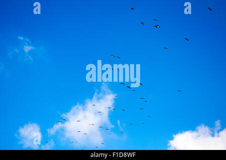 Sky background. Sky,clouds and birds background. - Stock Photo