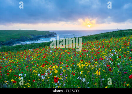 Sunset over a Field of Poppies and wild flowers above Porth Joke beach near Newquay Cornwall England UK Europe - Stock Photo
