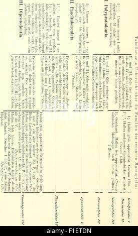 Die säugetiere. Einführung in die anatomie und systematik der recenten und fossilen Mammalia (1904) - Stock Photo