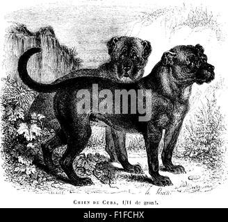 Histoire naturelle des mammifères, avec l'indication de leurs moeurs, et de leurs rapports avec les arts, le commerce - Stock Photo