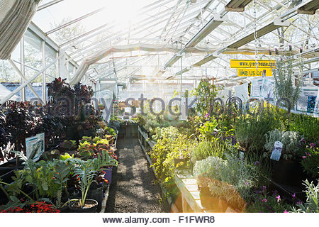 Plants and flowers in sunny greenhouse - Stock Photo