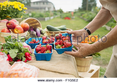 Farmer checking fresh strawberries at farmers market stall - Stock Photo