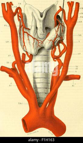 Traité d'anatomie topographique avec applications a la chirurgie (1884) - Stock Photo