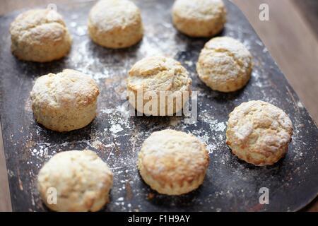 Nine freshly baked scones on baking tray - Stock Photo