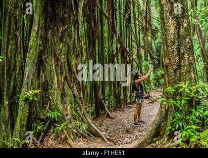 Young female tourist photographing on smartphone in jungle,  Manoa Falls, Oahu, Hawaii, USA - Stock Photo