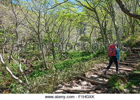 Hiker hiking up rocky trail to Hallasan the highest mountain in Korea, Jeju Island, South Korea - Stock Photo