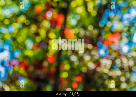 Soft focus photo of bright forest with sunlight, abstract natural background, blurred grunge image, - Stock Photo