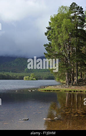 Scots pine woodland around Loch an Eilein in Rothiemurchus, remnant of the Caledonian Forest in the Cairngorms NP, - Stock Photo