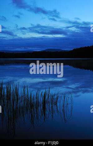 Silhouetted grass reflected in Loch Garten at night, Cairngorms National Park, Strathspey, Scotland, UK - Stock Photo