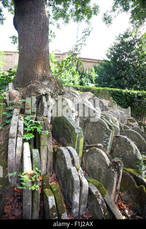 The Hardy Tree on the grounds of St Pancras Old Church, London, UK - Stock Photo