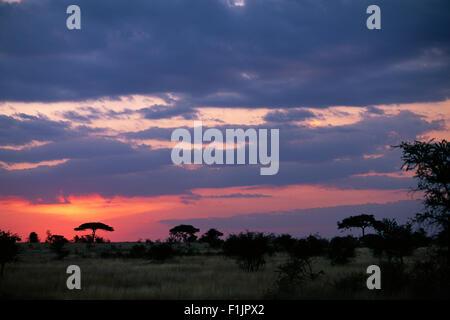 Sunset over Field with Acacia Trees, Serengeti, Tanzania, Africa