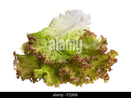 Lettuce salad leaf isolated on white background - Stock Photo