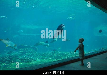 Child looking into aquarium at uShaka Marine World, Durban ...