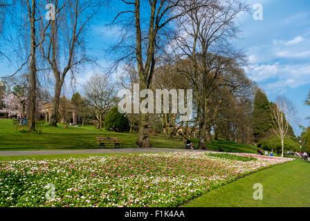 Spring flowerbeds in the Valley gardens, Harrogate