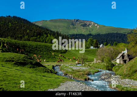 Pasture near the col d Aspin, Hautes Pyrenees, France - Stock Photo