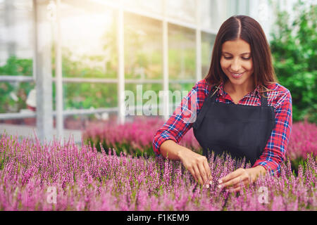 Successful young woman entrepreneur working in a greenhouse tending plants in her nursery as she cultivates them - Stock Photo