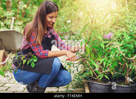 Attractive pretty young female nursery worker bending down pruning a potted plant in the greenhouse preparing it - Stock Photo