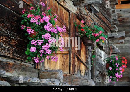 Geraniums decorating traditional wooden granary / raccard in Alpine village Grimentz, Valais / Wallis, Swiss Alps, - Stock Photo