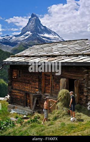Matterhorn and farmer storing hay in traditional wooden granary / raccard near Findeln, Valais / Wallis, Swiss Alps, - Stock Photo