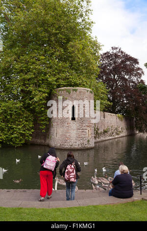People feeding the swans and ducks in the moat, the Bishops Palace, Wells city centre, Somerset England UK - Stock Photo