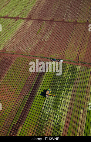 Pickers and tractor in market garden, Bombay Hills, South Auckland, North Island, New Zealand - aerial - Stock Photo