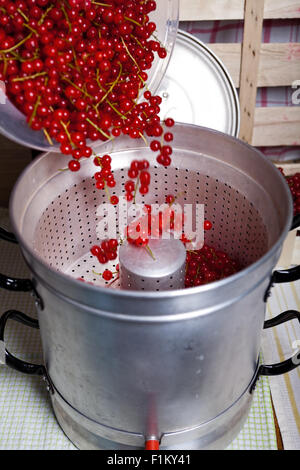 Pour ripe red, washed currants in the steam juicer to make currant syrup - Stock Photo