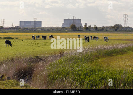 Hinkely Point nuclear power plant. A station to the left, B station to the right. From Steart salt marsh nature - Stock Photo