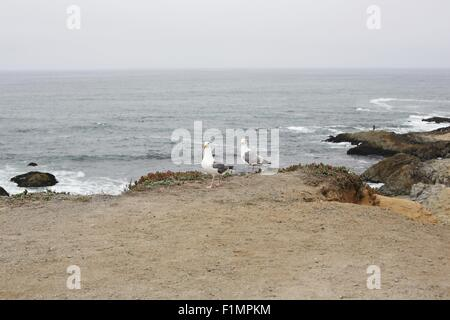 Two seagulls standing on the edge of a cliff next to the ocean. - Stock Photo