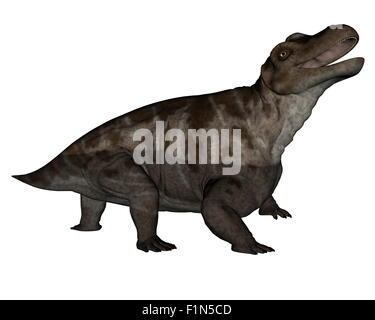 Keratocephalus dinosaur roaring isolated in white background - 3D render - Stock Photo