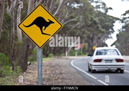 Kangaroo sign on a road - Stock Photo
