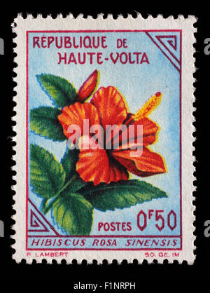 Stamp printed in Upper Volta shows Hibiscus, circa 1963. - Stock Photo