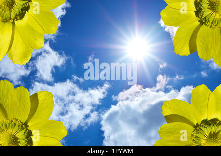 Yellow flowers against the sky. Flowers and sky. element of design - Stock Photo