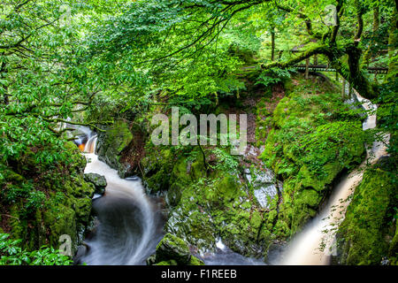 Landscape of a River & stream running through a lush green woodland in Ceredigion Wales UK - Stock Photo