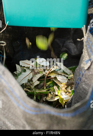close up of leaves and branches being shredded by electric garden shredder into sack - Stock Photo