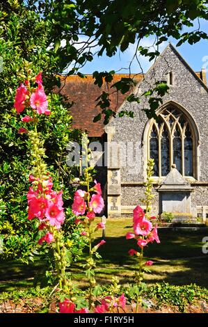 Church of St Mary the Virgin with Hollyhocks in the foreground, Hambledon, Oxfordshire, England, UK, Western Europe. - Stock Photo