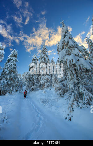 Hiker on snowshoes ventures in snowy woods, Casera Lake, Livrio Valley, Orobie Alps, Valtellina, Lombardy, Italy, - Stock Photo