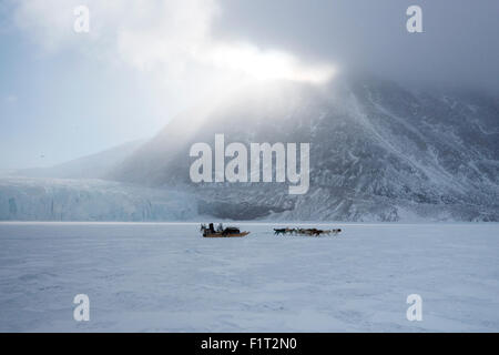 Inuit hunter and his dog team travelling on the sea ice, Greenland, Denmark, Polar Regions - Stock Photo