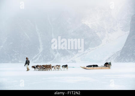 Inuit hunter walking his dog team on the sea ice in a snow storm, Greenland, Denmark, Polar Regions - Stock Photo