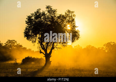 Dust in backlight at sunset, South Luangwa National Park, Zambia, Africa - Stock Photo
