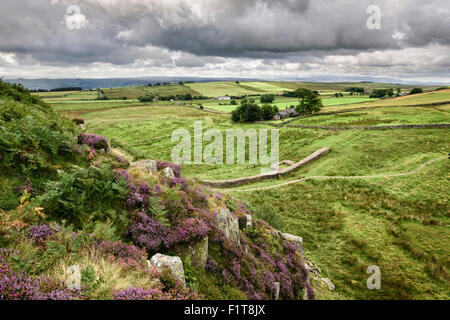Hadrian's Wall at Steel Rigg in Northumberland - Stock Photo