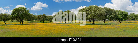 panoramic view of Alentejo cork trees and yellow flowers, Portugal - Stock Photo