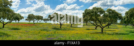 Panoramic view of a typical meadow in the Alentejo with cork trees - Stock Photo