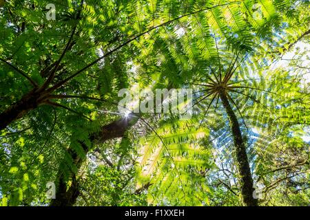 Costa Rica, Puntarenas province, Monteverde Cloud Forest, Reserva Biologica del Bosque (biological reserve of the - Stock Photo