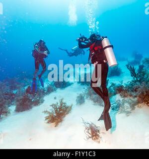 Diver Takes Photos Underwater, Cuba - Stock Photo