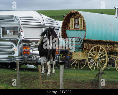 horse tethered in front of traditional bowtop and modern glitzy caravan at the annual travellers' gathering at Appleby - Stock Photo